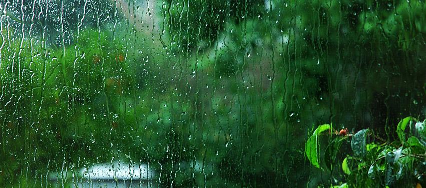 Rain Green