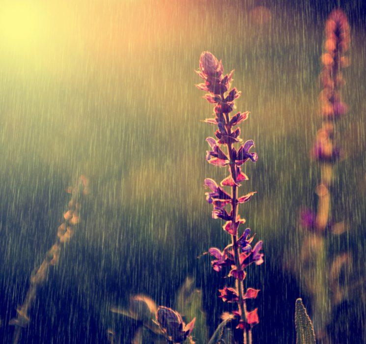 Meadow Rain